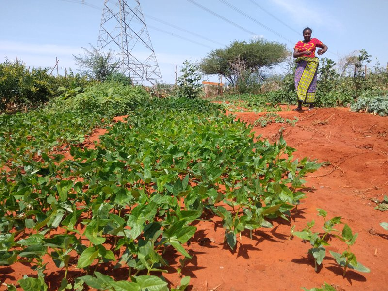 Enhancing Climate Advisories for Resilience in East Africa